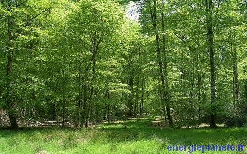 foret biomasse energie